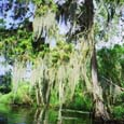 The bayou: Click for full-sized image